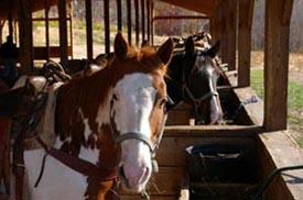 cedar creek stables